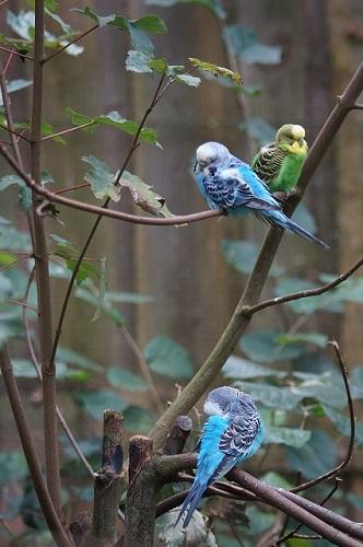 セキセイインコ 放鳥 動かない