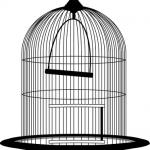 文鳥とセキセイインコの性格の違いは?