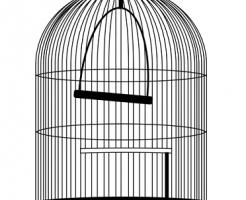 文鳥 セキセイインコ 性格